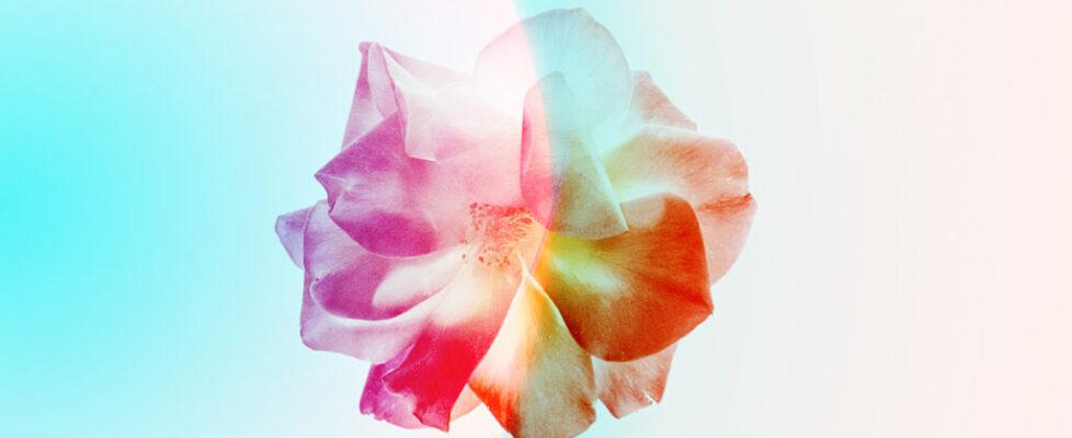 rose prayer